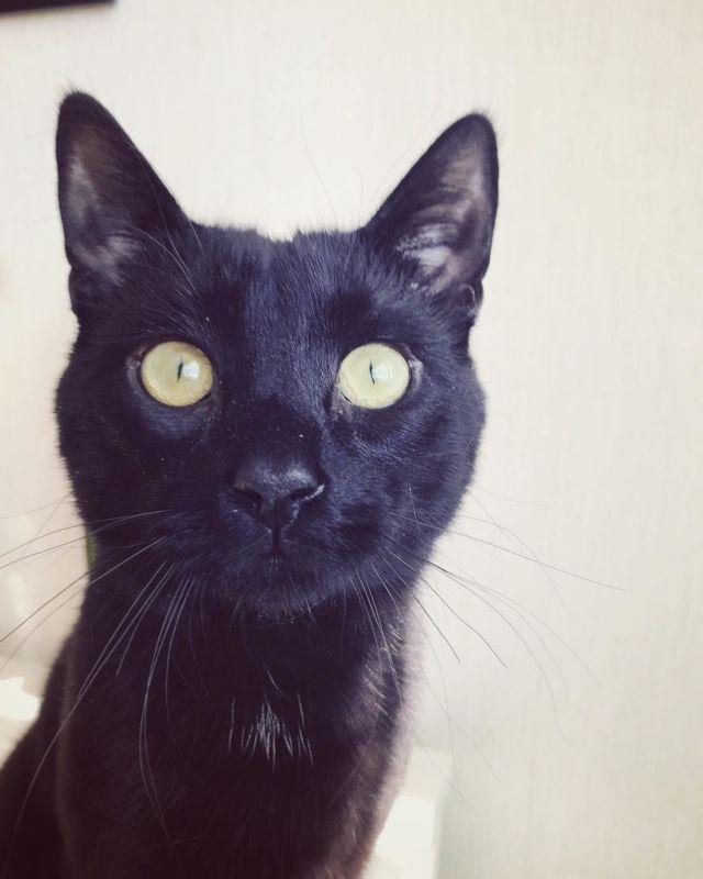 MEOW 😻  Nappi-kissalla on nyt ihan ikioma instagram-tili: @nappigrams 😼Tervetuloa seuraamaan Napin elämää 😺