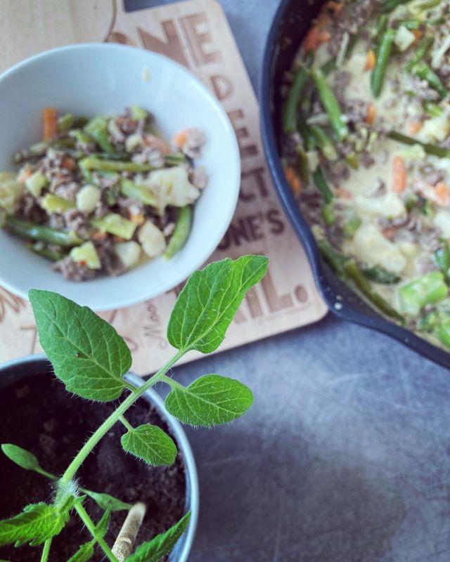 WOK IT OUT 🥦🥕  Tässä tulee herkullisen jauheliha-wokin resepti - joka on niin kermaista, että se oikein sulaa suussa. Tämä resepti on gluteeniton sekä se sopii vähähiilihydraattiseen ruokavalioon 😛  Reseptissä on tärkeää käyttää juuri Finduksen Hot Bangkok-wokkia, jotta oikeat maut ja vivahteet tulevat esiin. Testaa ja ihastu - nam 😋  Reseptin löydät Diiskuneiti-blogista 🌶