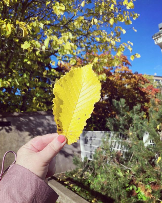 🍁🎃🍂🍄  Autumn leaves and pumkins please ☔️