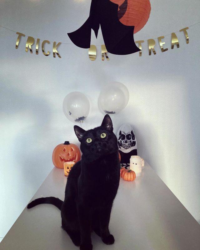 """🐈⬛👻🎃🎉🦇🤡  Diiskuneiti-blogista löytyy meidän halloweenin fiilistelyjä ja koristeluita. Mukana tietenkin söpö """"koristeluapulainen"""" Nappi 🐈⬛  ➡️➡️➡️ https://diiskuneiti.vaikuttajamedia.fi   @vaikuttajamedia @nappigrams"""